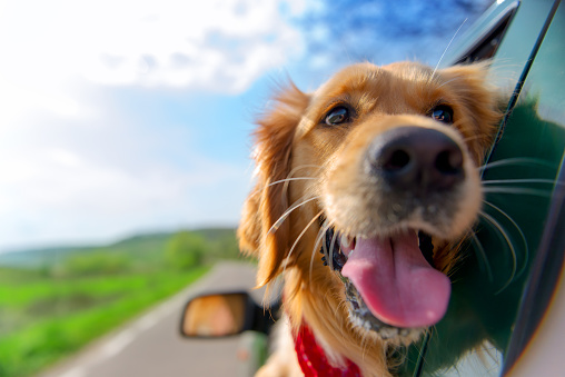 Riding with Rover: 10 Must-Haves for Driving with Your Dog