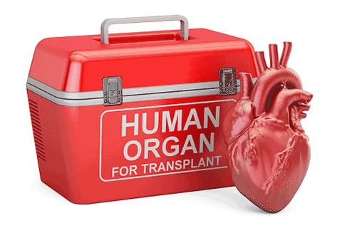 Could self-driving cars—purportedly much safer than human-driven models—actually make donated organs scarcer because fewer people are dying on the road?